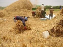 Farba Senghor : « Les récoltes sont catastrophiques»