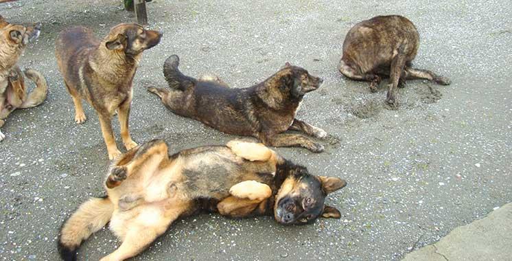 HYDROBASE: des chiens errants sèment la peur.