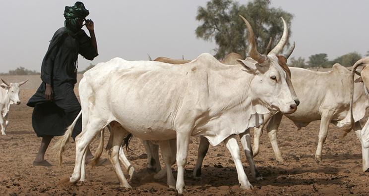 DAGANA : ASSTEL 2 lance un programme d'alphabétisation au profit des éleveurs.
