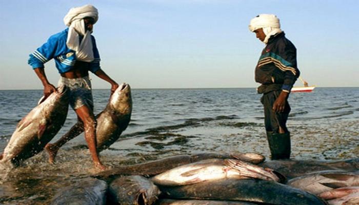 """"""" Toutes nos pirogues sont à terre faute de main d'œuvre étrangère """", crie un mareyeur mauritanien"""