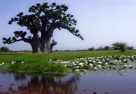 """Écotourisme: A la découverte de Mboro, surnommée """" le grenier à légumes"""""""