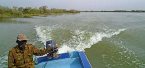 Saint-Louis : un policier meurt noyé dans le fleuve à Djoudj