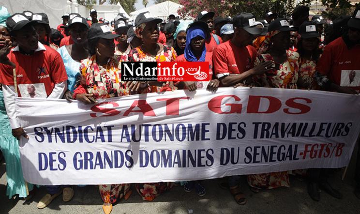 Journée mondiale des travailleurs : la procession syndicale de Saint-Louis ( vidéo - photos )