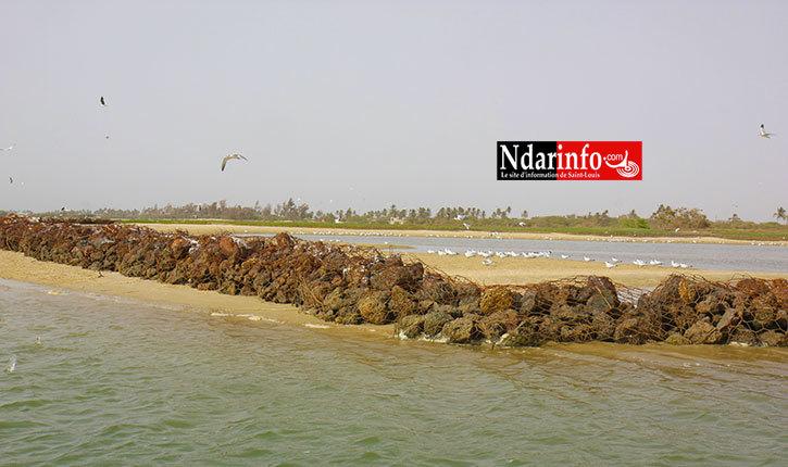 Gestion écosystème des zones humides : Le Directeur des parcs nationaux liste les difficultés pour la conservation des oiseaux migrateurs.
