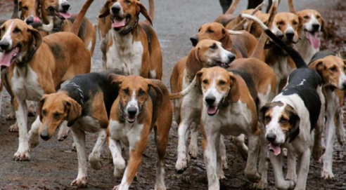 Insécurité : des chiens errants sèment la peur à Saint-Louis