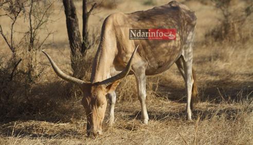 Le pastoralisme au cœur du développement dans le sahel (responsable)