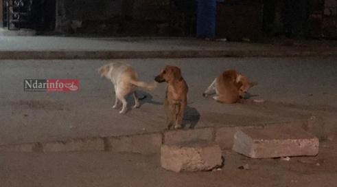 ILE NORD: Un homme « agressé » par  des chiens errants