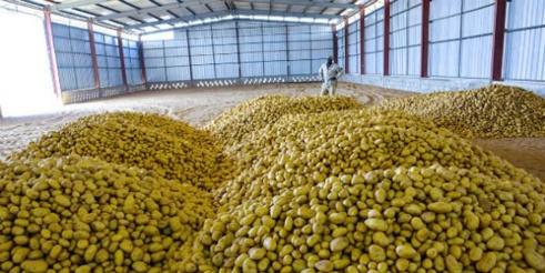 MBANE - Cambriolage de la ferme agricole de Senegindia : 130 millions FCFA emportés