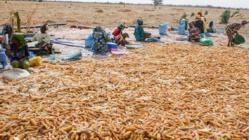Saint-Louis : Plaidoyer pour une autonomisation économique totale des femmes rurales