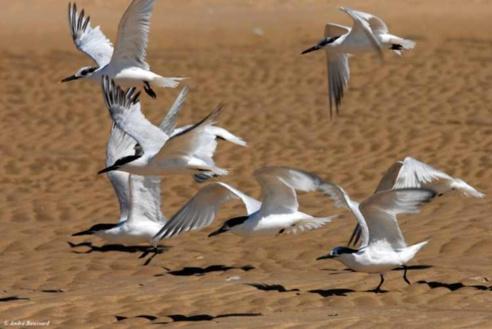 Mauritanie : création d'un Festival international sur le patrimoine d'une réserve côtière