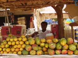 """Mangue : de """"nouvelles dispositions' sur les opérations d'inspection et de certification phytosanitaire"""