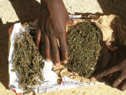 Trois tonnes de chanvre indien saisies par la gendarmerie à Thiès