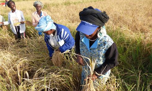Richard-Toll : la directrice d'ONU Femmes salue le 'dynamisme' des productrices de riz