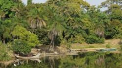 Affaire des exploitants forestiers de Boussoloum : Des disparitions inquiétantes