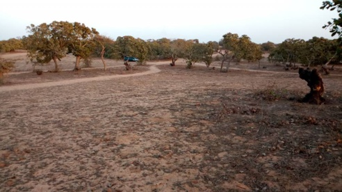 Litige Foncier : Les habitants de DIAMA dénoncent l'accaparement de leurs terres par le maire Oumar Mourel Sow
