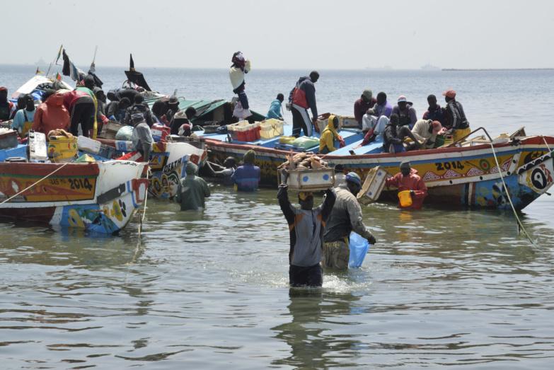 La pénurie de poissons hante le Sénégal