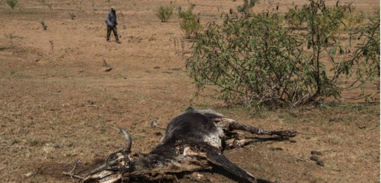 Keur Momar Sarr : Des pastèques empoisonnées tuent cinq vaches