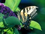 Biodiversité Yeti Yone revit