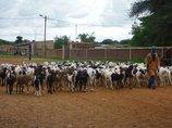 A Danthaidy, dans la communauté rurale de OGO