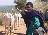 Podor: Un berger Burkinabé sauvagement abattu