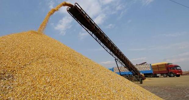 Hausse de la production céréalière estimée à plus de 2,735 millions de tonnes pour 2018-2019