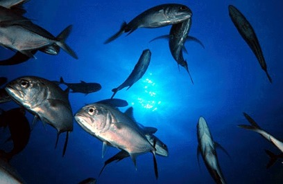 Partenariat pour une gestion durable de la pêche au Sénégal