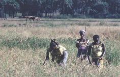 Sen Huile déclare avoir investi près de 100 milliards de francs CFA dans l'agriculture