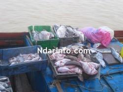 ENTRETIEN EXCLUSIF avec Meissa Gaye: ''Le problème des licences de pêche est entretenu par une forte mafia très organisée.''