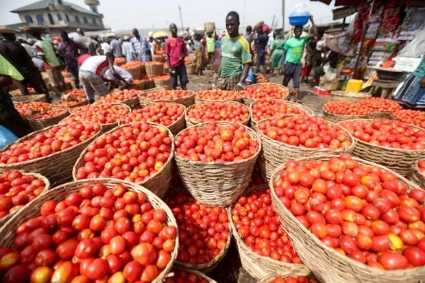 Filière tomate : une production de 60.800 tonnes pour 2018-2019