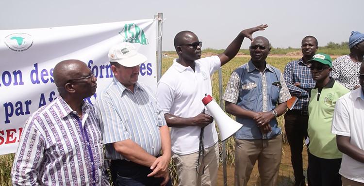 Autosuffisance en riz : AfricaRice vante les mérites de ses semences hybrides (vidéo)