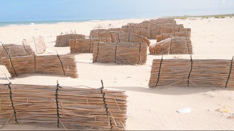 Protection de la Langue de Barbarie : un projet favorise le développement des dunes de sable sur l'AMP de Saint-Louis (vidéo)