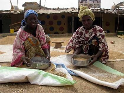 Production de riz local: les besoins nationaux estimés à 900 000 tonnes