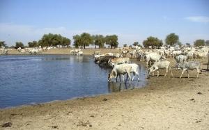 Contre un projet agricole de 26 000 hectares, les éleveurs de Dagana menacent : «Si à Podor il y a eu deux morts, ici il y aura des milliers de morts.»