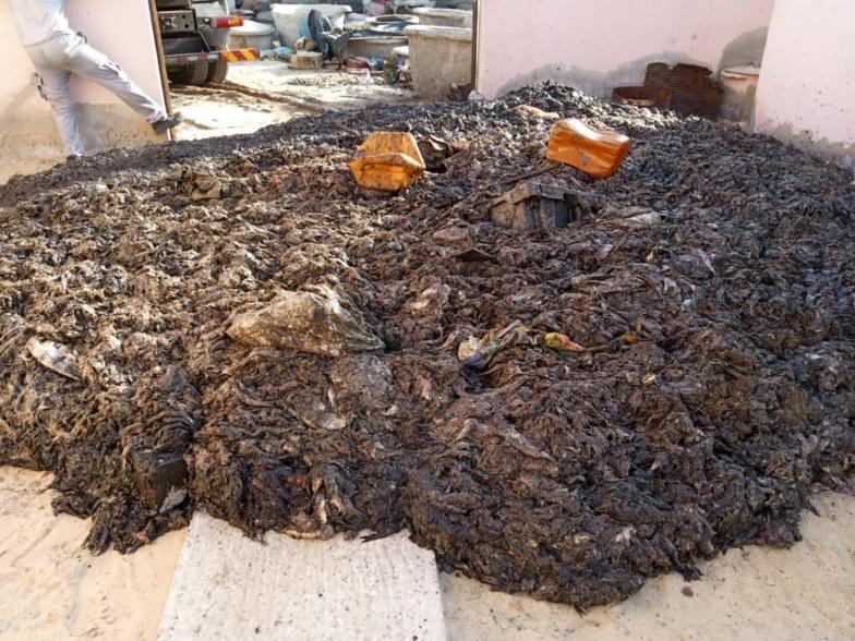 Les poissons morts déversés à l'entrée de Saint-Louis produiront 500 m3 de biogaz ... (photos)