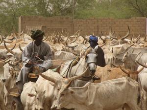 Destruction de la ferme de Wade à Diokoul Diawrigne: Les 12 paysans restent en prison
