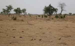 Urgent: Macky Sall a annulé le déclassement partiel de la réserve spécial de Ndiaël (Dagana)