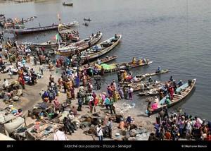 Mauritanie: Plaintes des mareyeurs sénégalais: ''«On nous impose d'embarquer avec nous deux mauritaniens(...) introuvables, soit inexpérimentés(..) en plus, nous payons jusqu'à 2000 Ouguiyas
