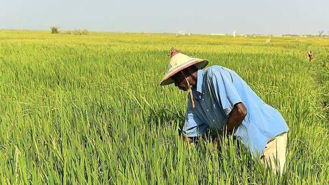 Le Covid-19 doit servir de prétexte à une réflexion sur notre souveraineté alimentaire (universitaires)
