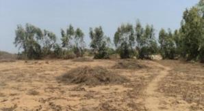 Saint-Louis- Fanaye- Projet Sen Ethanol : Macky Sall prêt à réactiver le projet enterré par Wade