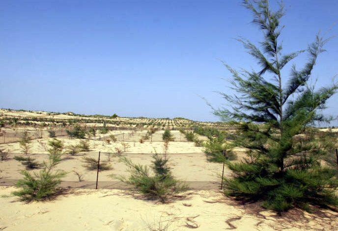 De Dakar à Saint-Louis, une forêt comme rempart contre les assauts de la mer