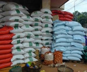 Riziculture et lutte contre la pauvreté:  Africa Rice teste 300 variétés résistant au sel, à la chaleur et au froid