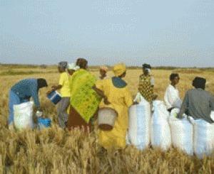 Agriculture: Vers un conseil présidentiel sur la sécurité alimentaire