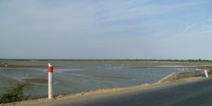 Apparition de deux nouvelles brèches sur le fleuve Sénégal : des villages du Gandiolais face à la furie
