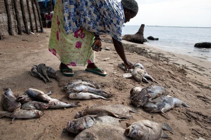 Greenpeace invite l'Etat du Sénégal à faire la lumière sur la mort inexpliquée d'espèces marines dans ses eaux territoriales [PHOTOS[)
