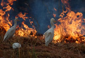 PODOR : Les feux de brousse ont consumé plus de 65000 ha. [AUDIO]