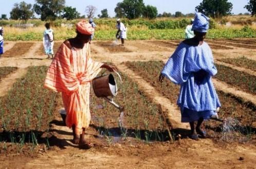 Un projet d'appui à la production et à la formation agricoles lancé dans la région de Saint-Louis.