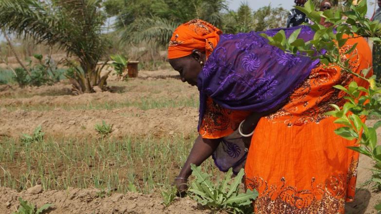 Un officiel reconnait l'urgence de faciliter l'accès des femmes rurales à l'énergie