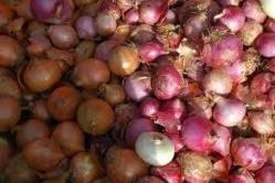Conservation des produits agricoles : Bokhol va disposer d'un magasin de stokage d'oignon d'une capacité de 100 tonnes