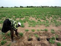 Sen-Ethanol, le projet soupçonné d'accaparer des terres