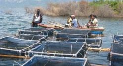 Atelier sur les techniques aquacoles à Richard-Toll : L'aquaculture, une réponse à la problématique de l'emploi